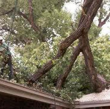 Hurricane Damage Emergency Tree Service