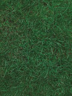 Model Landscaping Inc 23415 Wood Ln Rogers, MN 55374