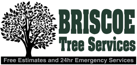Briscoe Tree Service