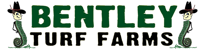 Bentley Turf Farms
