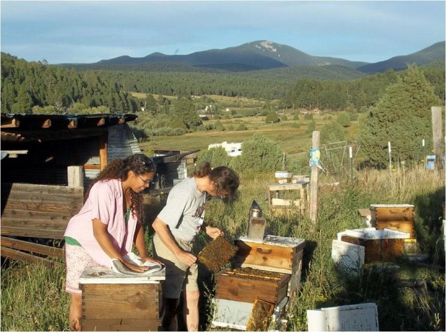 Hillbilly Bees